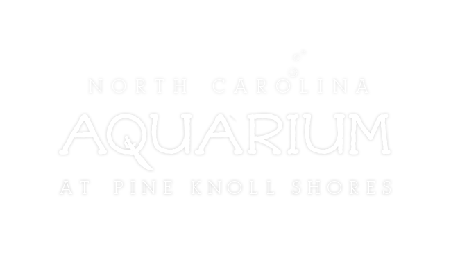Aquarium at Pine Knoll Shores