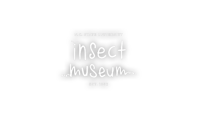 NCSU Insect Museum