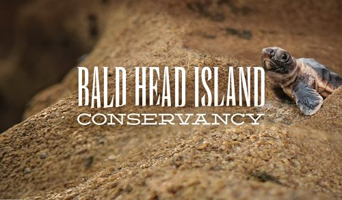 Bald Head Island Conservancy
