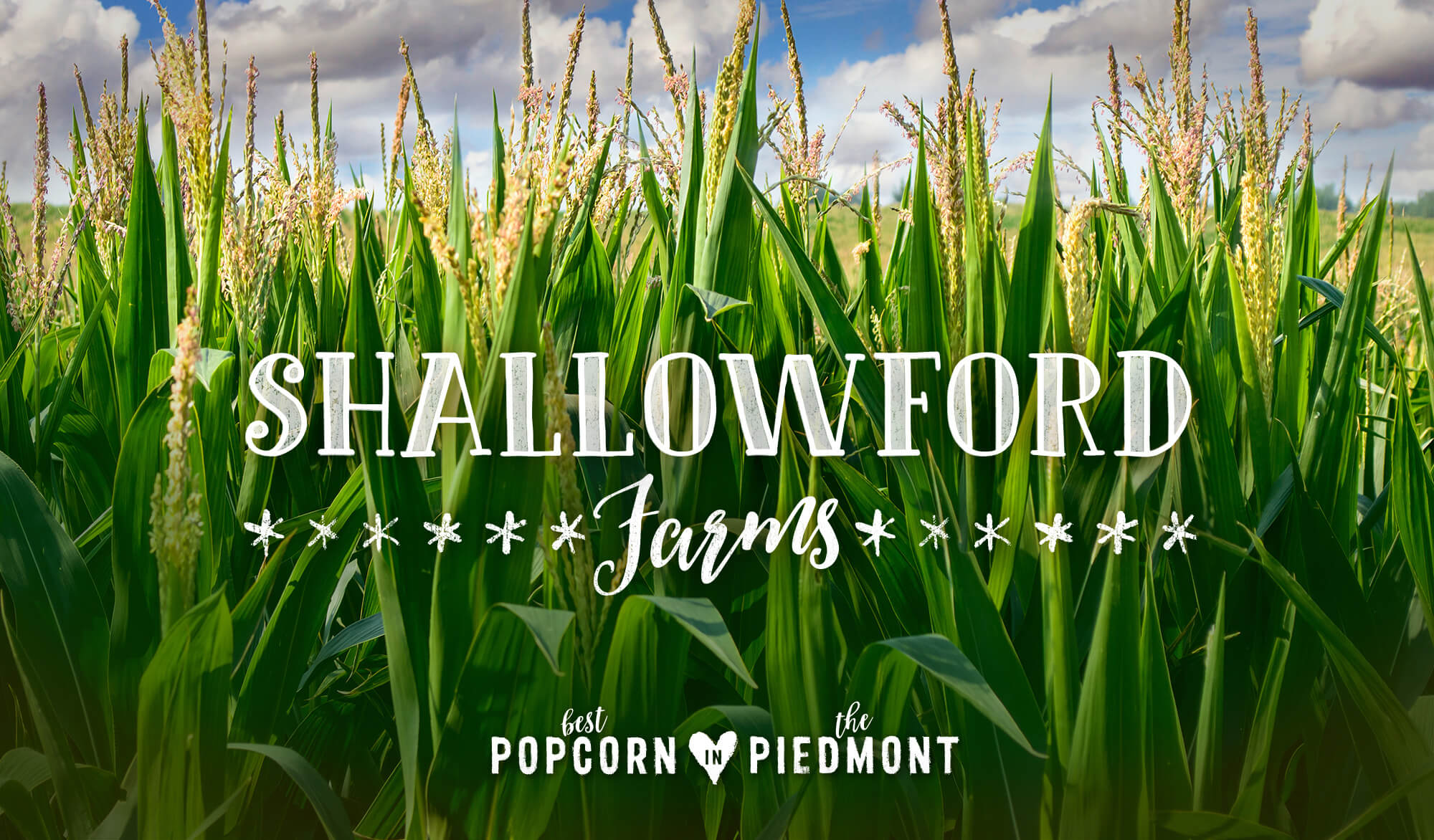 Shallowford Farms